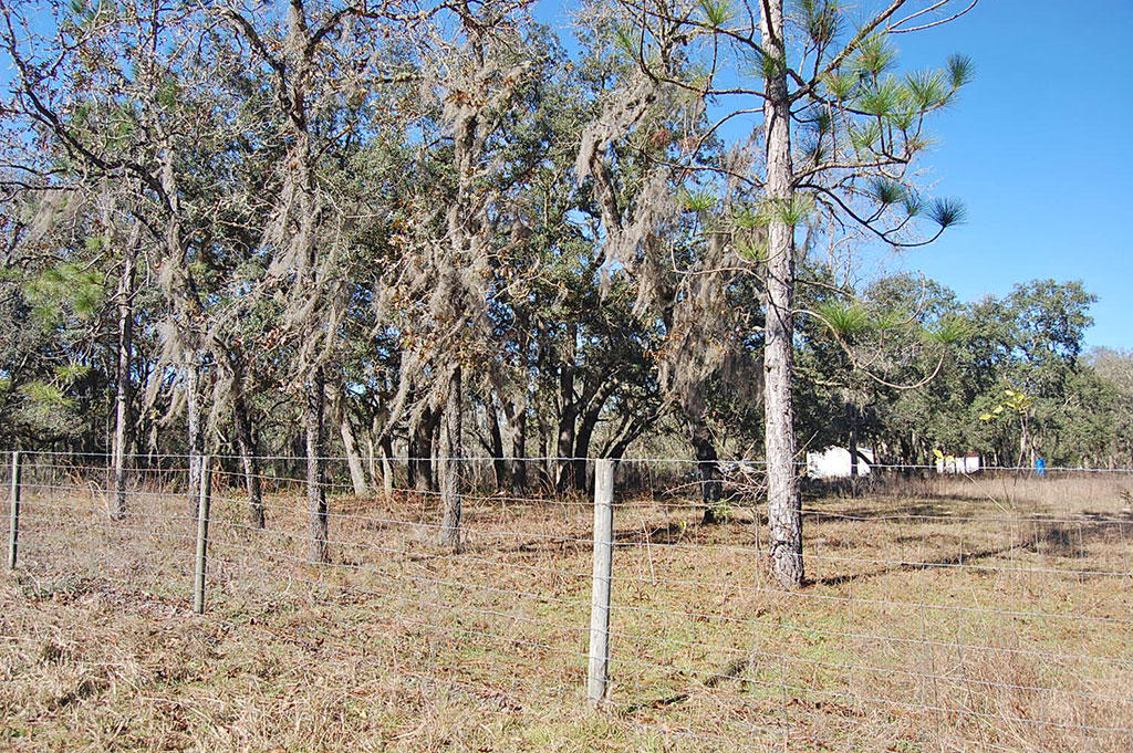 Treed Lot In A Rural Residential Neighborhood - Image 3