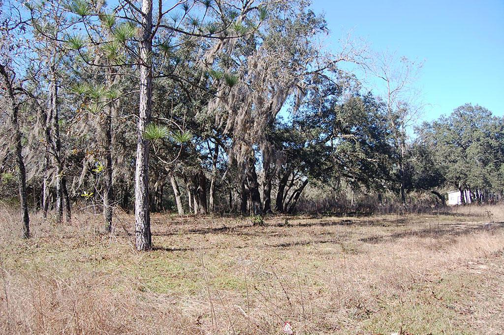 Treed Lot In A Rural Residential Neighborhood - Image 5