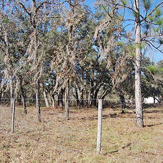 Treed Lot In A Rural Residential Neighborhood - Image 1