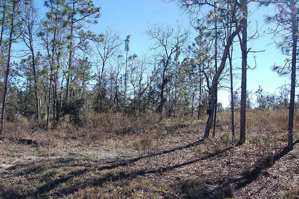 Undeveloped Land Located Near Main County Road - Image 4