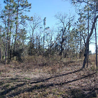 Undeveloped Land Located Near Main County Road - Image 0