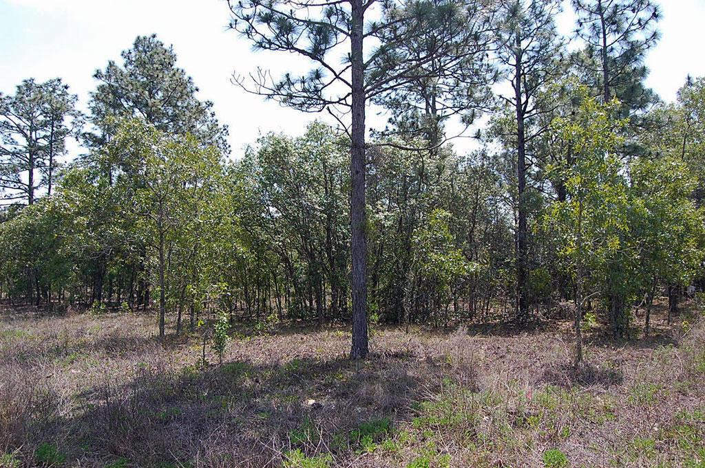 One Acre Florida Getaway Between Dunnellon and Williston - Image 2