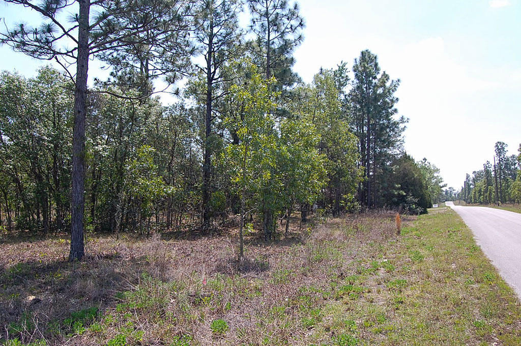 One Acre Florida Getaway Between Dunnellon and Williston - Image 3