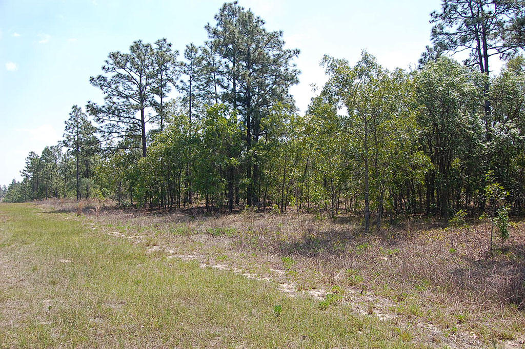 One Acre Florida Getaway Between Dunnellon and Williston - Image 5