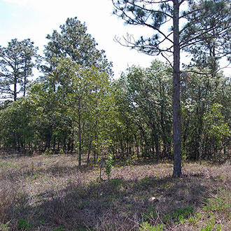 One Acre Florida Getaway Between Dunnellon and Williston - Image 0
