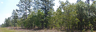 One Acre Florida Getaway Between Dunnellon and Williston