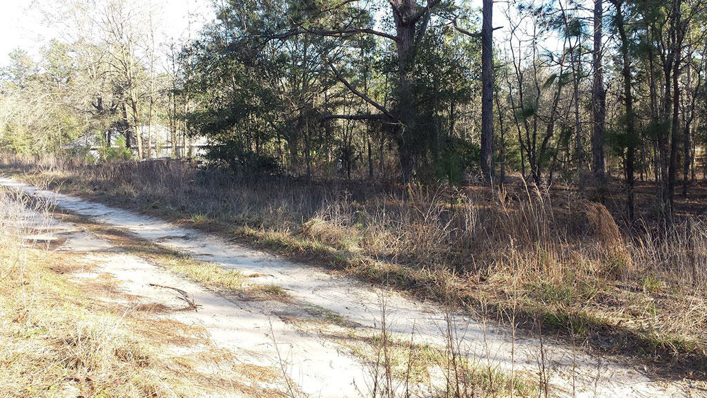 Large Treed Lot Ready For Home Building in Quiet Neighborhood - Image 2