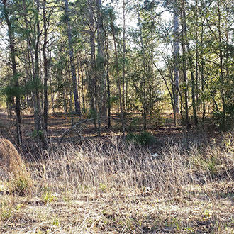 Large Treed Lot Ready For Home Building in Quiet Neighborhood - Image 0