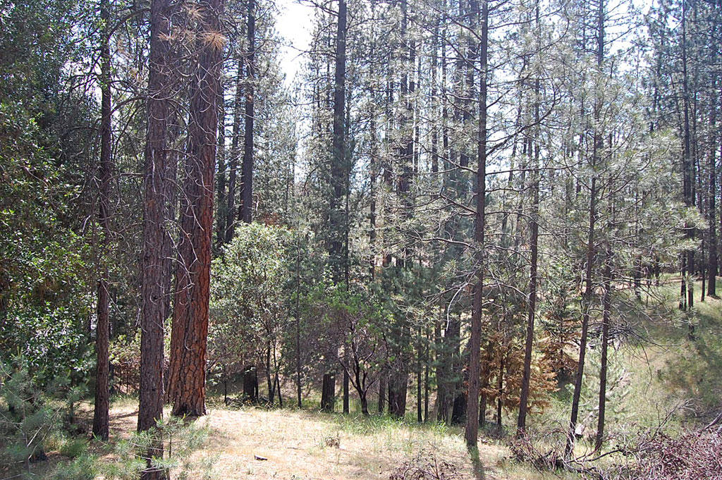 California Homesite Outside of Yosemite National Park - Image 2