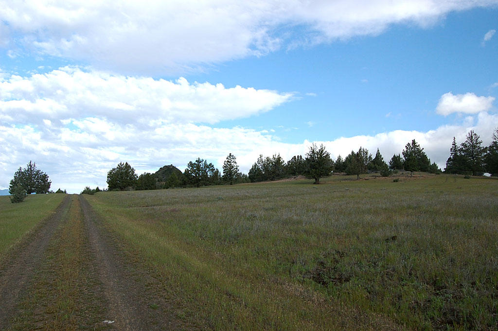 Country Acreage Just Outside of Hornbrook CA - Image 4