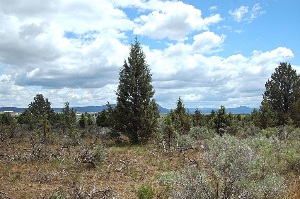 Nice Lot just East of Klamath Falls National Park - Image 5