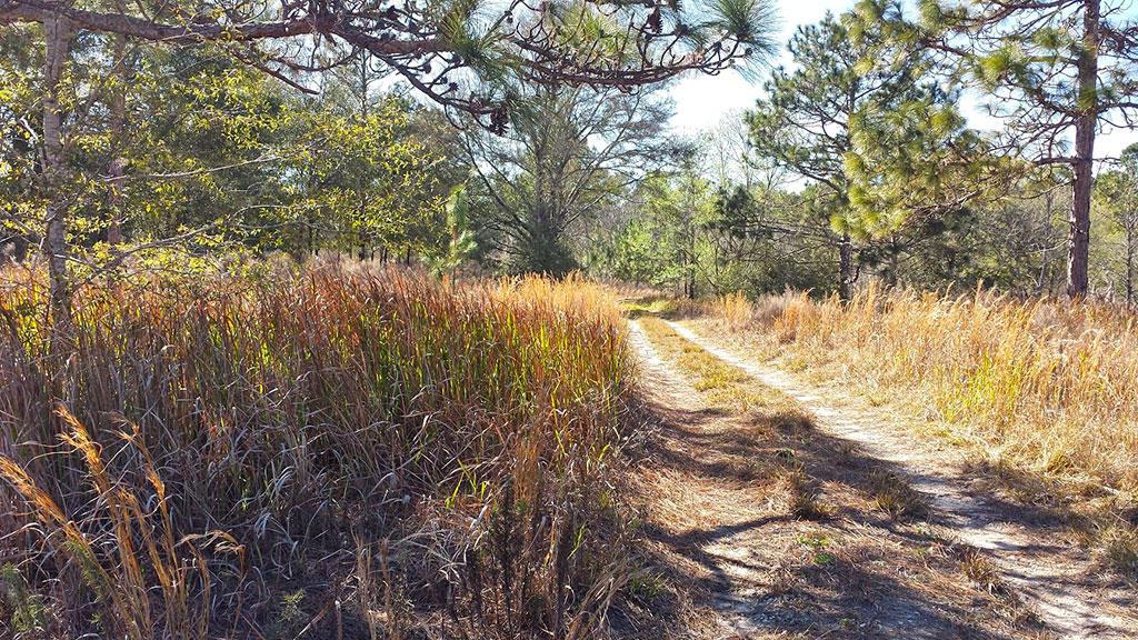 Ocala Homesite Near Horse Racing Track - Image 3