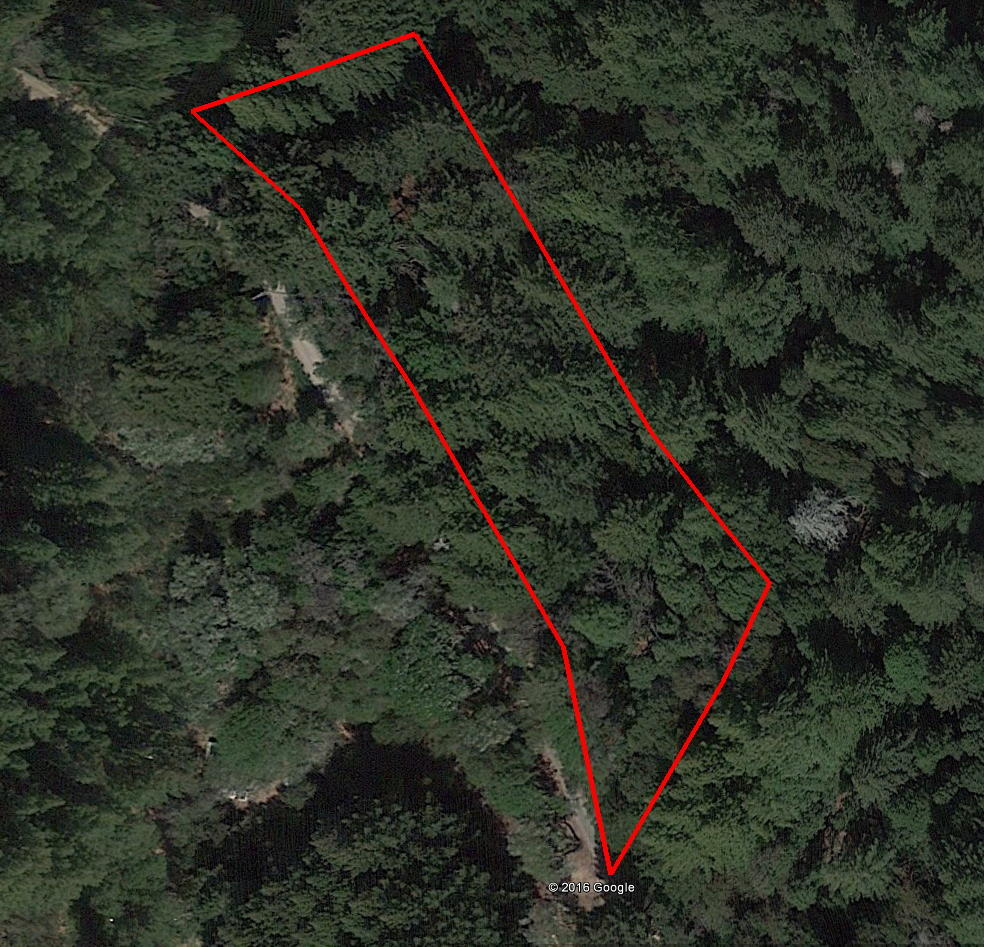 Forested Sloped Property Close to Town - Image 1