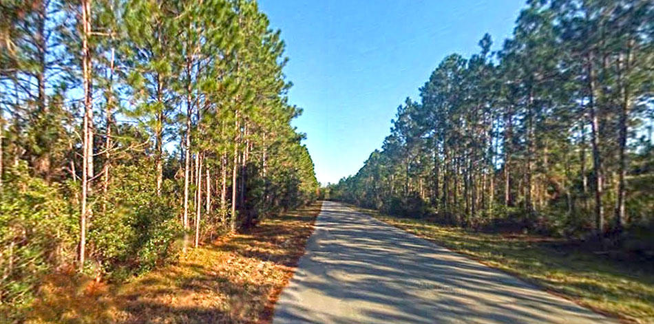 Treed Lot on Paved Road Quarter Mile from St Johns River - Image 3