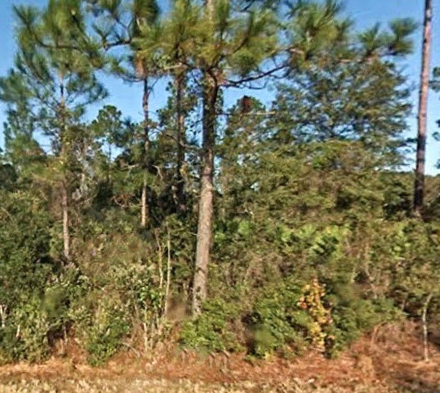 Treed Lot on Paved Road Quarter Mile from St Johns River - Image 1