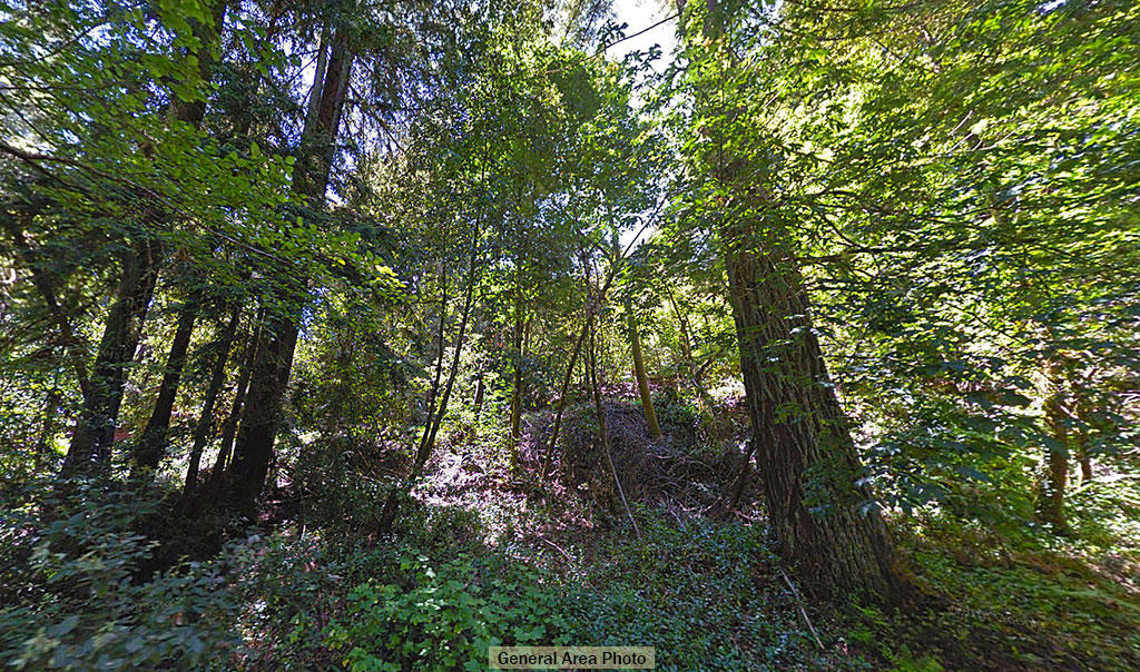 Forested Sloped Property Close to Town - Image 5