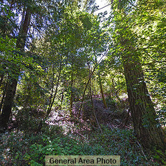 Forested Sloped Property Close to Town - Image 0