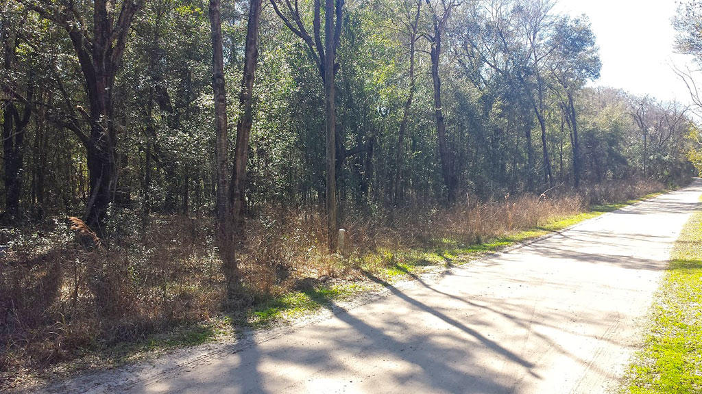 Treed Property in Belleview Heights Estates in Summerfield - Image 4