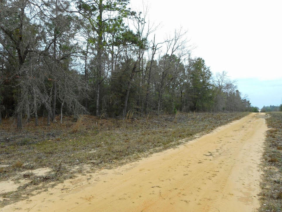 Large residential lot in a quiet rural setting - Image 3