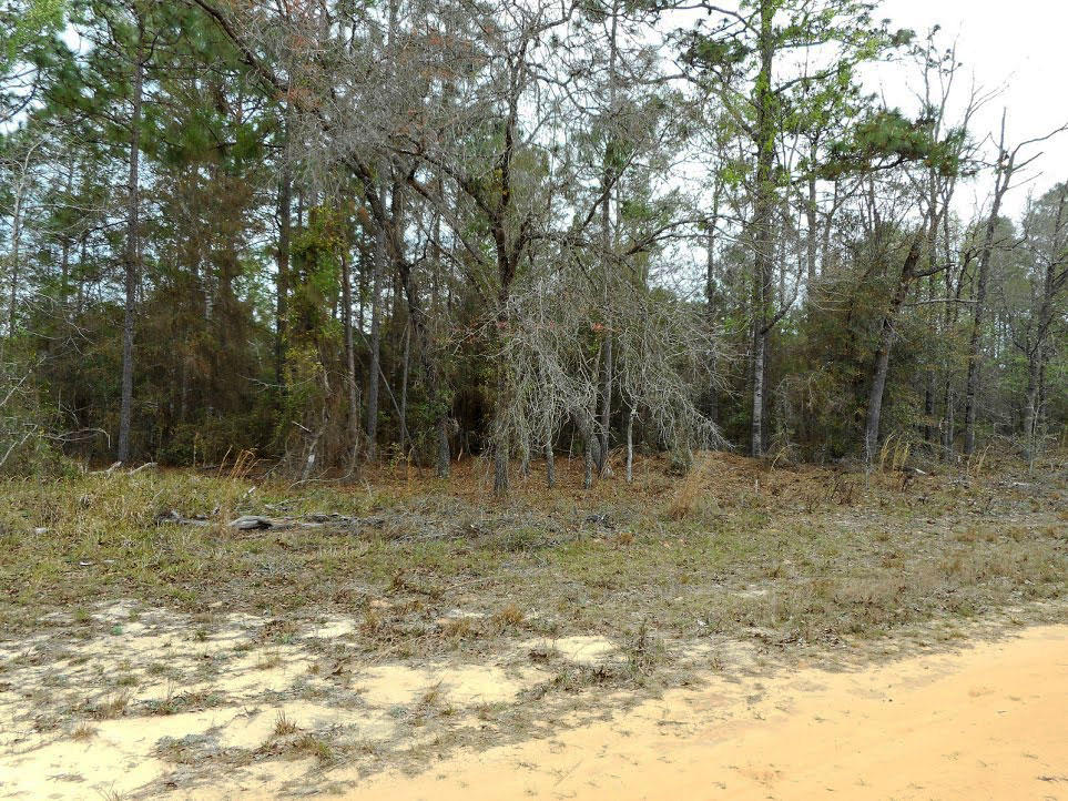 Large residential lot in a quiet rural setting - Image 5