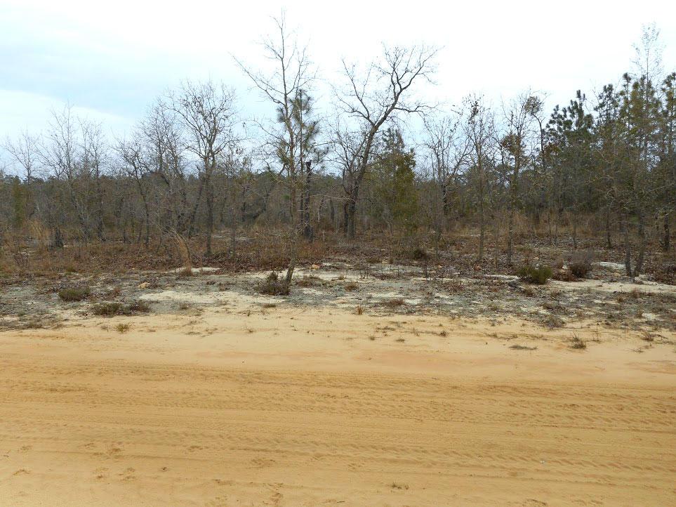 Half an Acre Rural Home Site in Interlachen Florida - Image 3