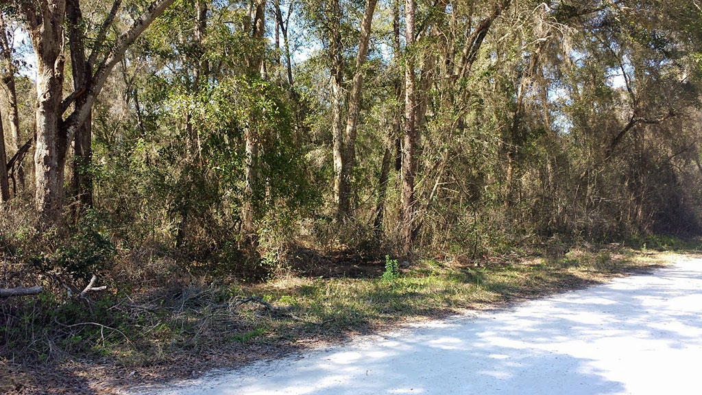 Property with Good Access in Developing Belleview Subdivision - Image 3