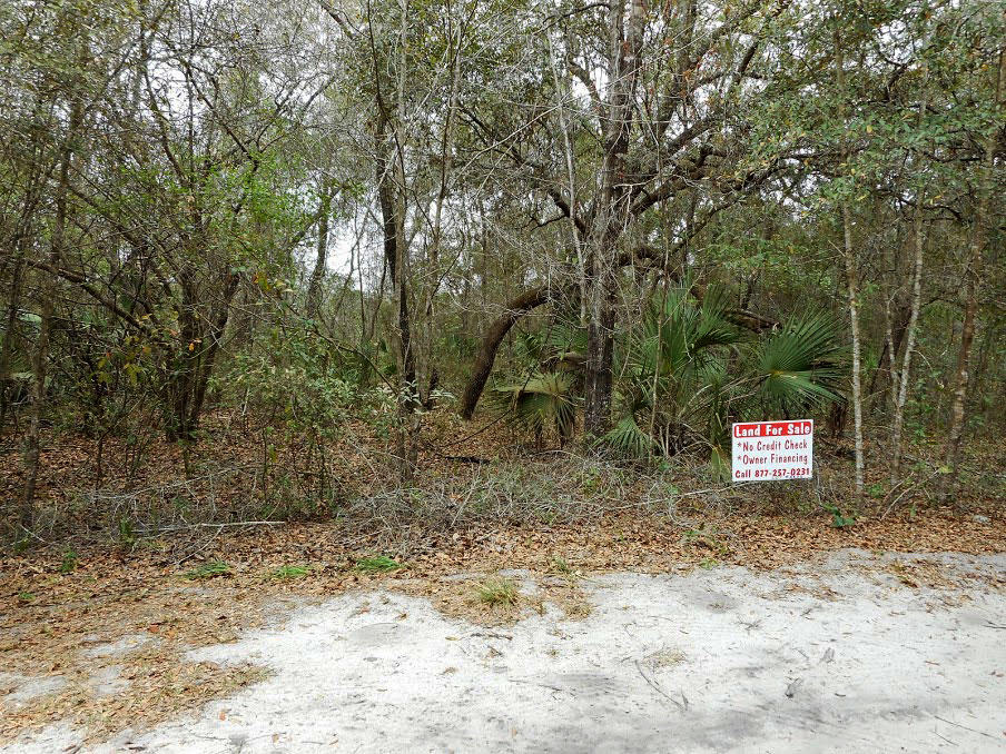 Fort McCoy Lot Close to Pegram Lake and Island Lake - Image 3