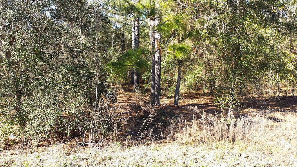 Residential Lot in Charming Ocala Florida - Image 3
