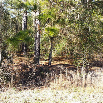 Residential Lot in Charming Ocala Florida - Image 0