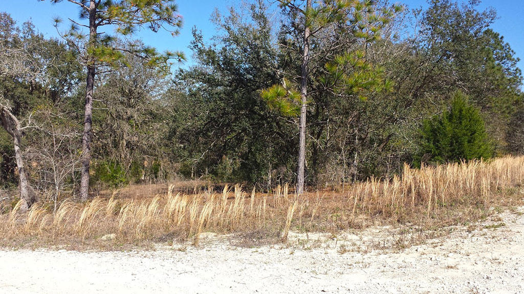 Well Over Half an Acre Parcel on Corner Lot - Image 2