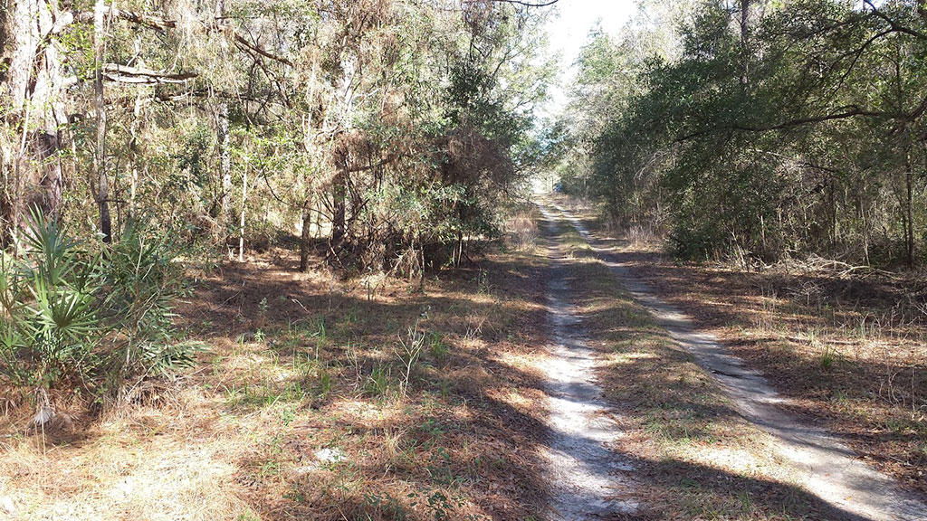 Just Under Half Acre Treed Lot - Image 2