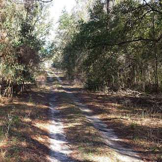 Just Under Half Acre Treed Lot - Image 0