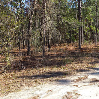 Treed Lot Just Under an Acre - Image 0