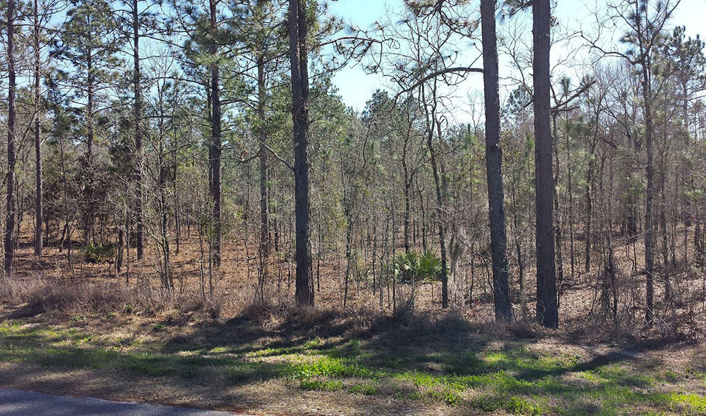 Over An Acre Property off of SW 62nd Place - Image 2
