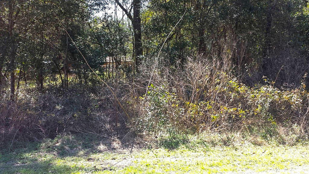 Nearly 0.25 Acres Close to Belleview - Image 3