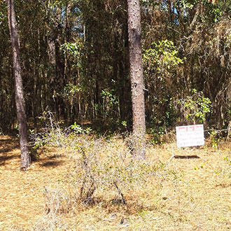 Home Sized Lot in Bellview - Image 0