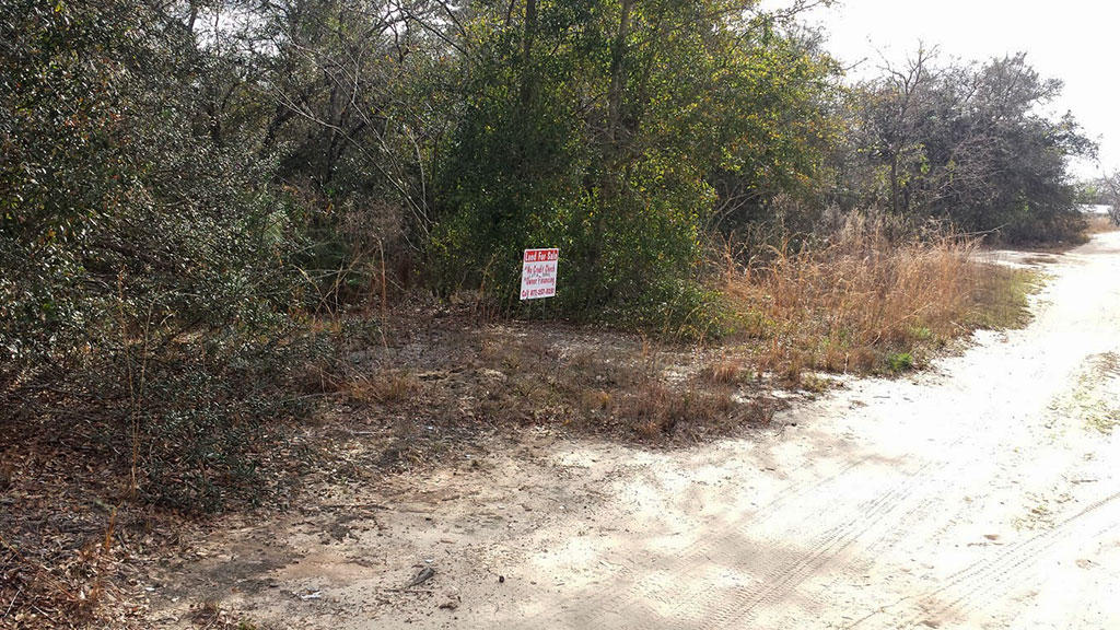 Explore this Land Just Outside of Ocala - Image 2