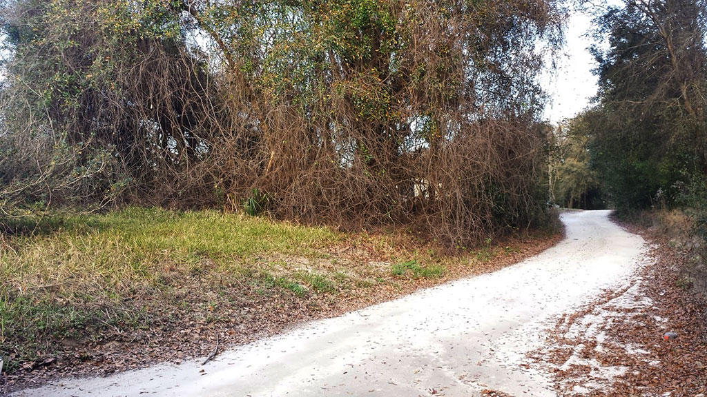 Great Belleview Property in Developed Neighborhood - Image 4