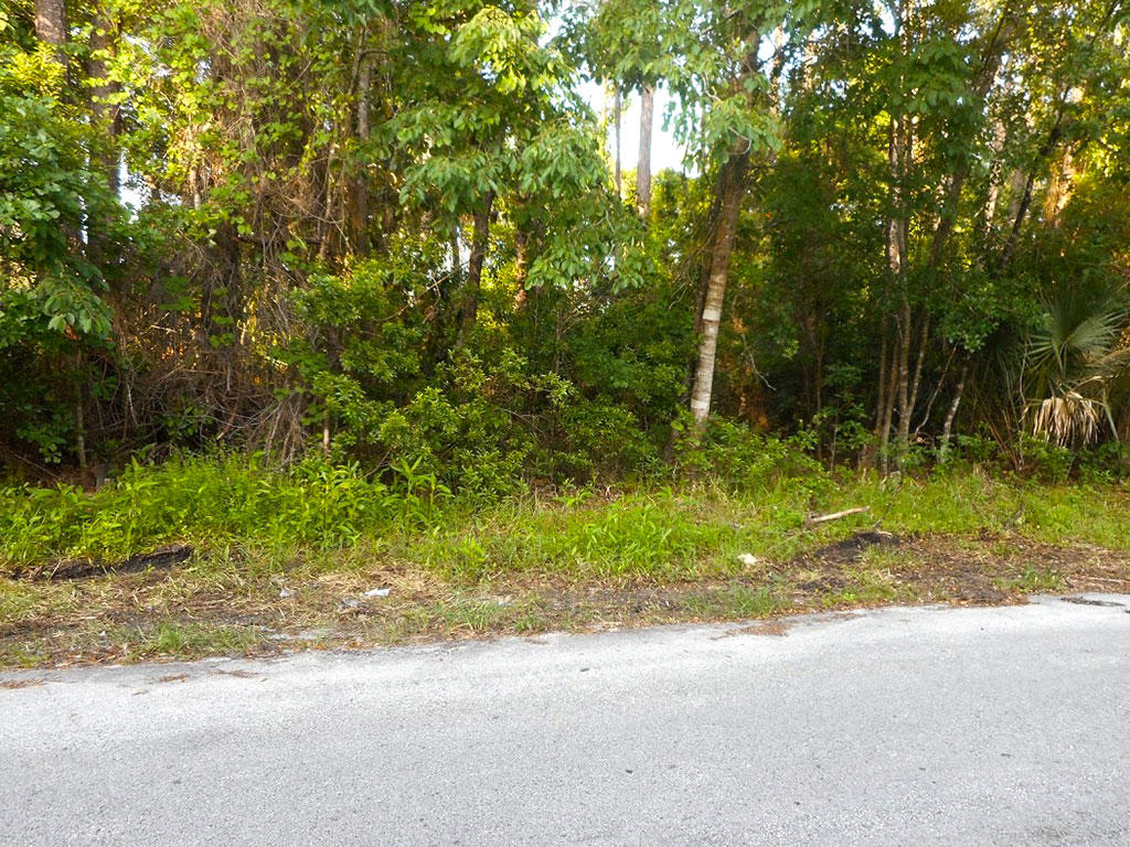 Residential Lot close to St Johns River - Image 4