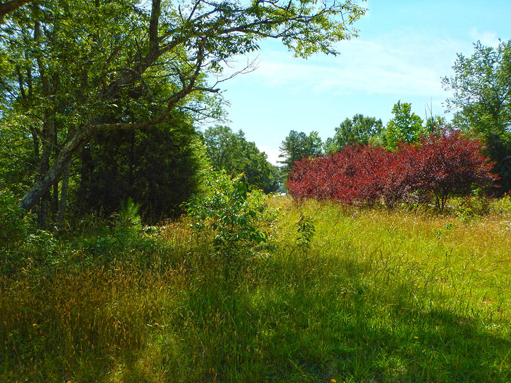 Large Acreage South of Greenville - Image 5
