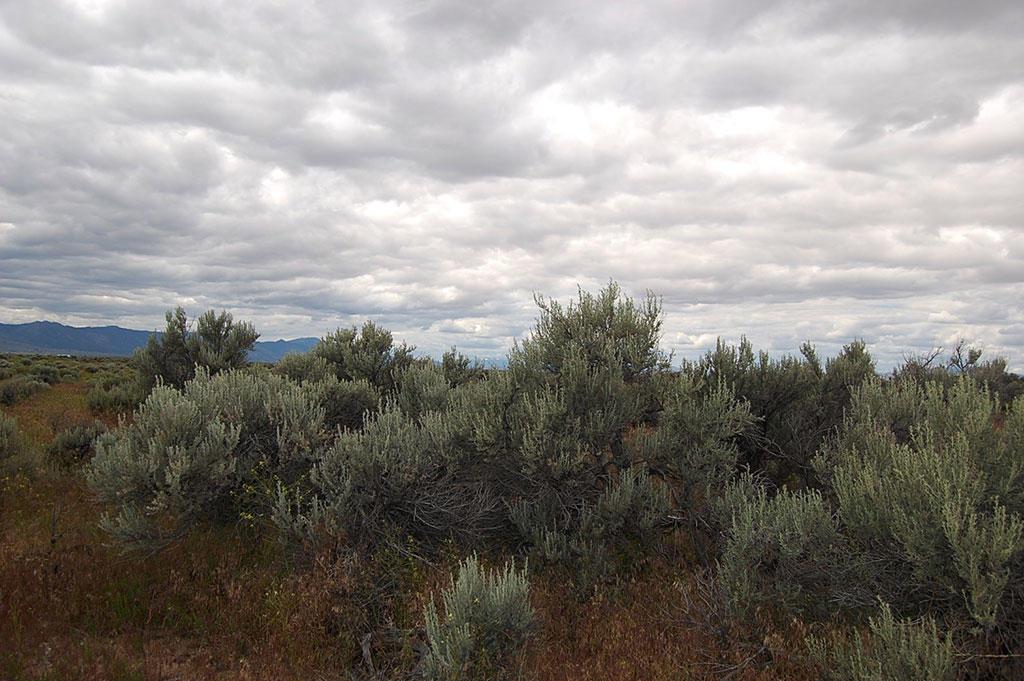 Rural Lot in Northern California - Image 2