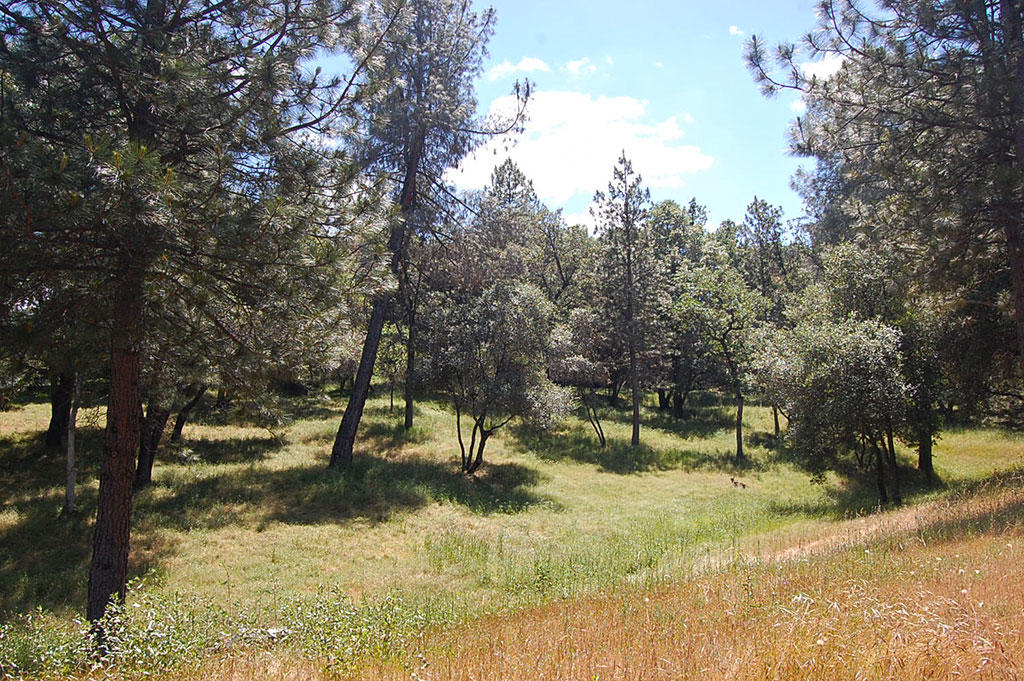 Large Lot in Friendly Community Near Yosemite National Park - Image 2