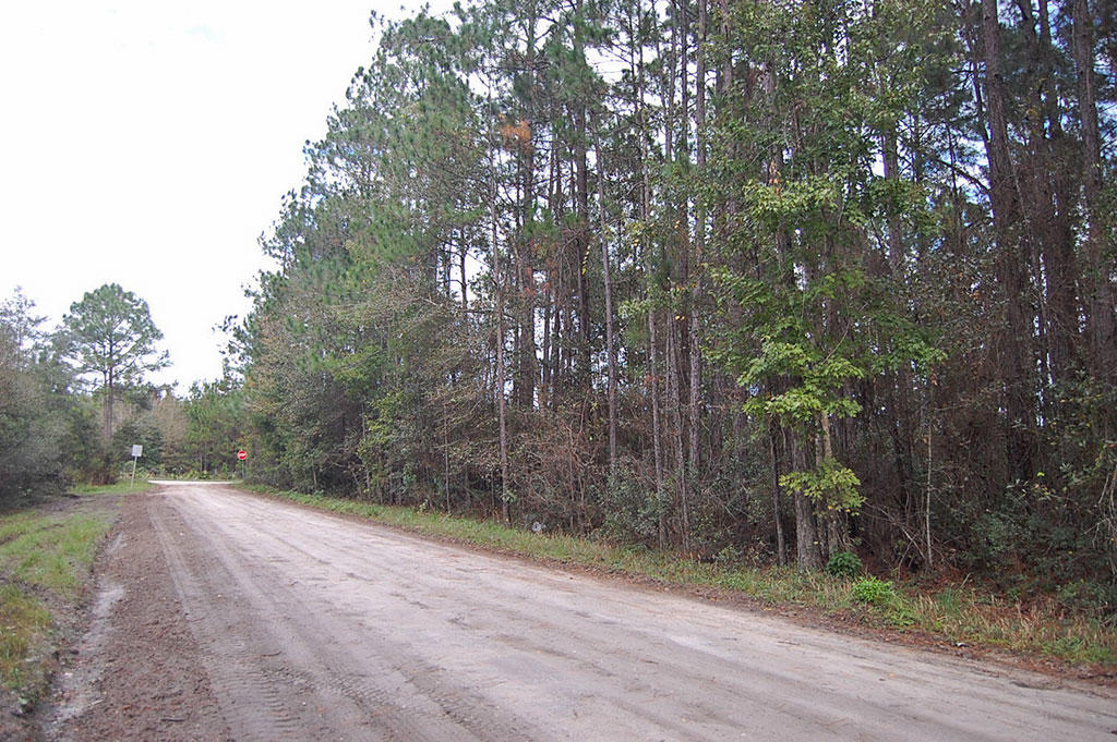 Half-Acre Homesite Near the St. Johns River - Image 3