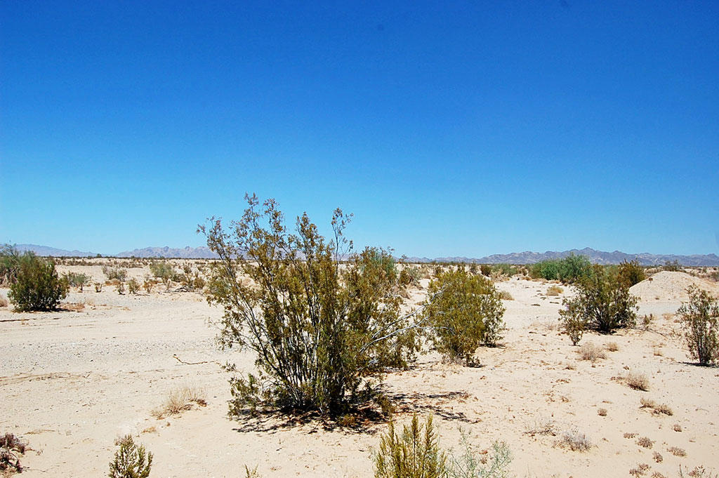 21 Acre Property About 12 Miles Northeast of Calipatria - Image 4