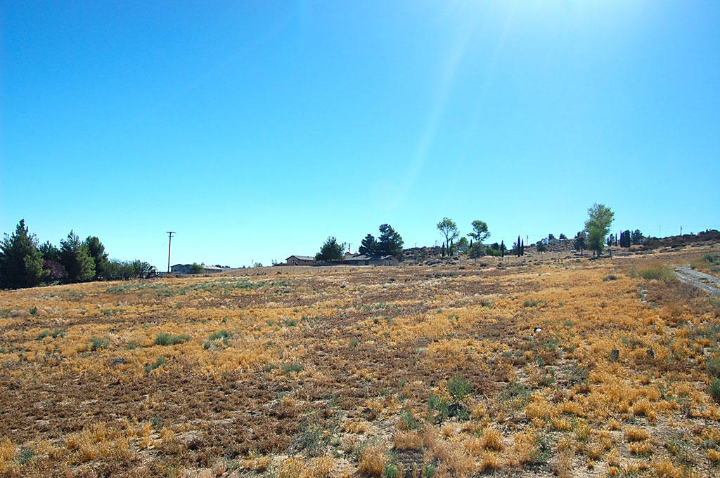 Over 2 Acres Near Lake Riverside - Image 2