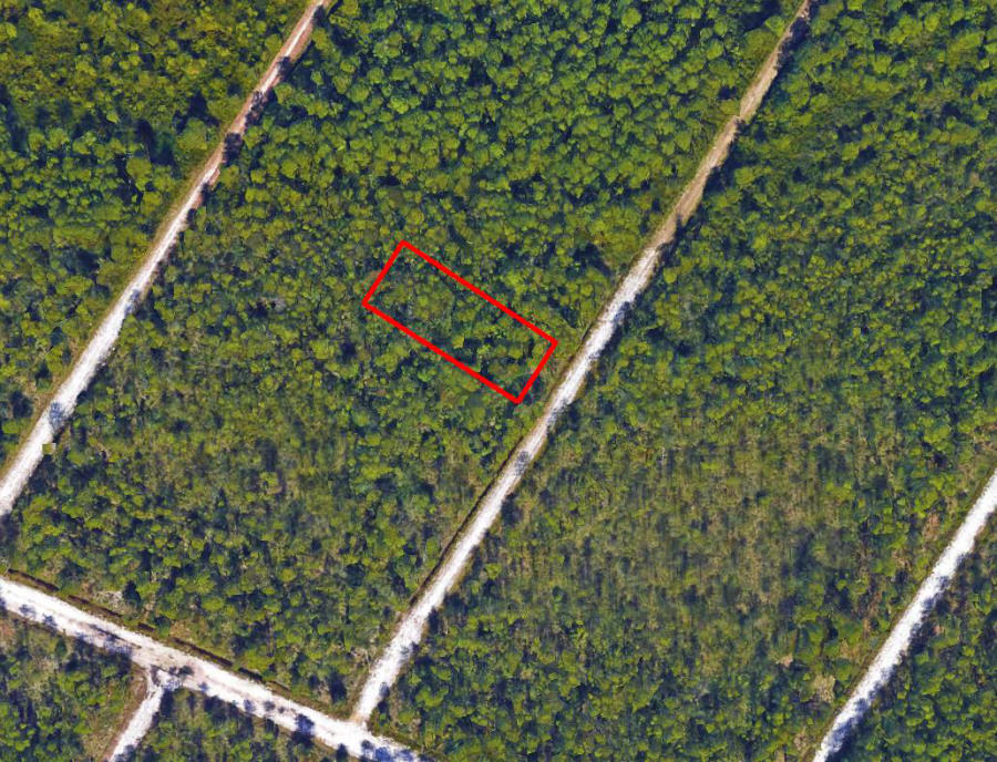 Private Land with Trees an Hour from the Beach - Image 1