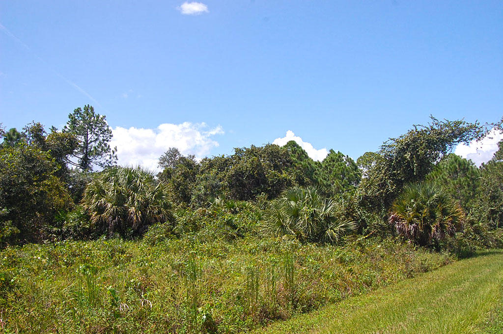 Over Half an Acre in Highlands Park Estate Neighborhood of Lake Placid - Image 5