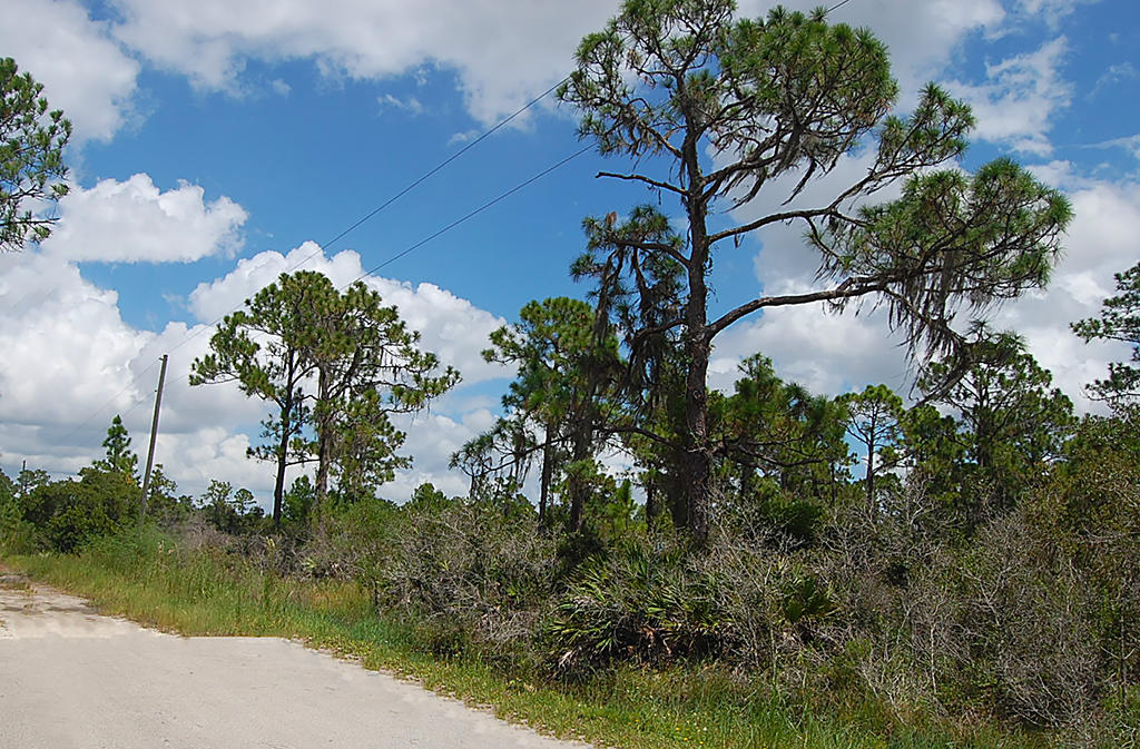 Quarter of an Acre Florida Land Near Lakes - Image 3