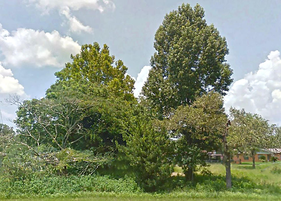 Nice Size Residential Lot in South Ocala - Image 4