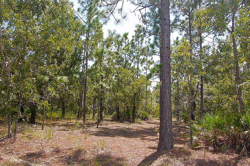 Excellent Small Residential Lot in Homosassa - Image 4